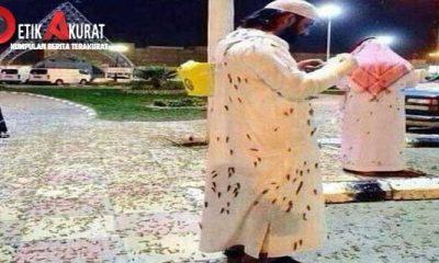 fenomena-aneh-kelompok-serangga-menginvasi-masjidilharam-makkah