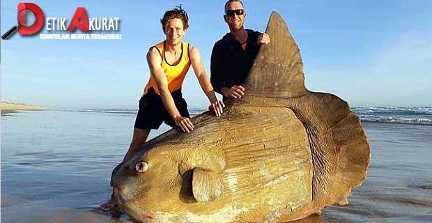 ditemukan-ikan-aneh-di-pantai-australia-mirip-kayu-dan-bermata-melotot