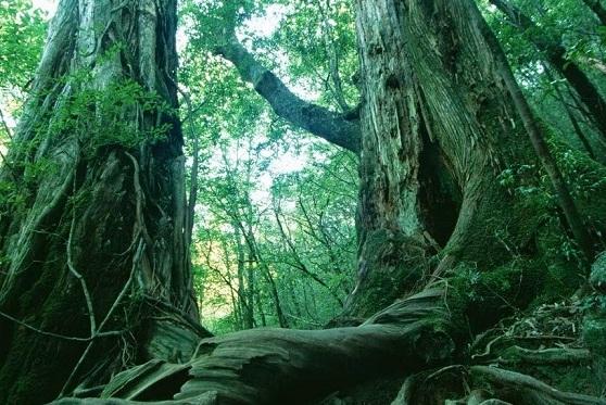 4. Hutan Jati Petak 45F, Kendal